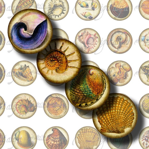 Beautiful Shells (1) Digital Collage Sheet - 48 Circles 1inch - 25mm or smaller -  Antique Shells on parchment - Buy 3 Get 1 Extra Free