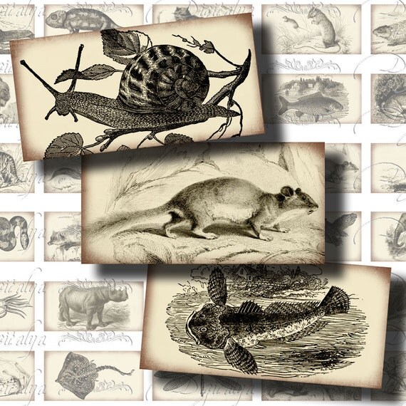Victorian Zoology (1) Digital Collage Sheet - Vintage Animals Illustrations on Old Paper - 30 Domino 1x2 inch for pendant