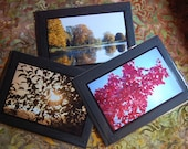 Autumn Leaves Photo Cards- Strathmore Card - 3 different designs - Blank inside