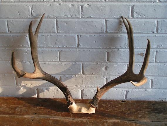 Vintage Eight Point Mule Deer Antlers