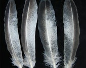 Airbrushed and hand dyed imitation bald eagle feathers