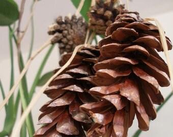 Natural Ecofriendly home decor Pine cones raffia Christmas ornaments by Fianaturals