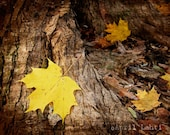 Maple Leaf 8X10 Fine Art Photograph - AprilLahti