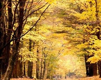 Autumn Road 8X10 Fine Art Photograph