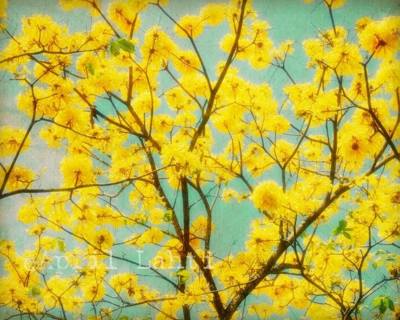Sunshine Tree 8X10 Fine Art Photograph