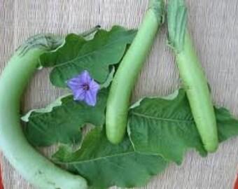 Bombay Green Eggplant