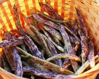 Dragon Lingerie Beans