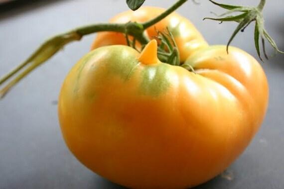 Orange Jubilee Tomato