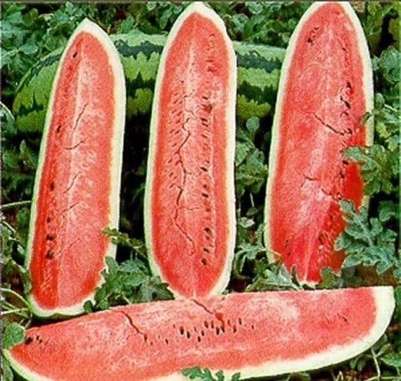 Wa-Wa-Watermelon Seeds