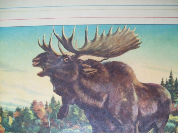 Vintage Paul Bransom Moose Nature Animal Art Print lodge cabin decor