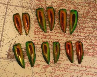 6 Pair Drilled Red Jewel Beetle Wings