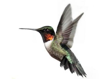 Erin's Hummingbird Decal