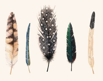 Feathers 2 - 8 x11 print