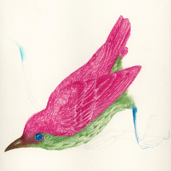 Art Print Pink and Green Bird