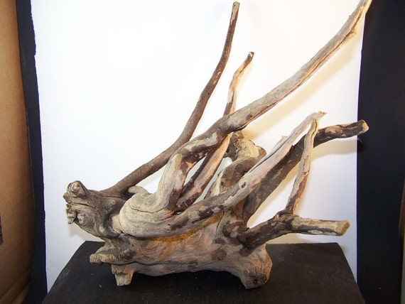 driftwood root 12x5x8