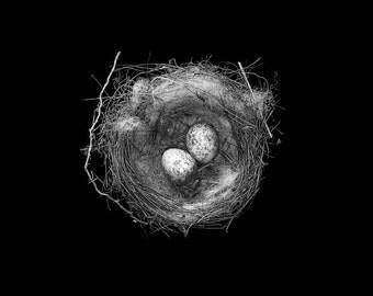black and white birds nest photograph (NestE013B&W)