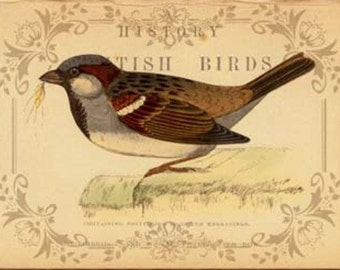 British Birds III - Cross stitch pattern pdf format
