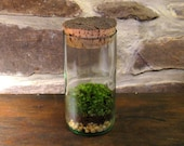 terrarium in recycled glass bottle, indoor garden, moss
