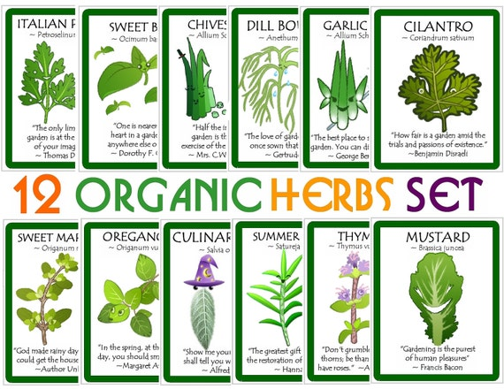 Custom Collection of High Quality Organic  Herb Seeds