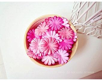Mixed pink daisy Petals / pack
