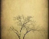 Fine Art Photography Print-Rustic Home Decor-Southwestern Art-Tree,Landscape Fine Art Prints