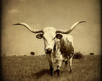 Western Photography-Texas Longhorn-Southwest Decor-Rustic Art Print Sepia