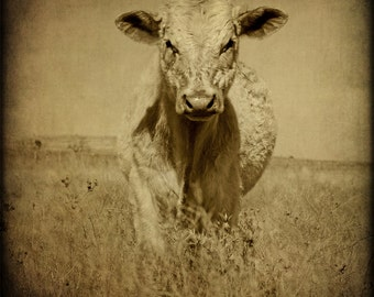Texas Photography Cow Prints Western Photograph Rustic Home Decor Sepia Country Animal Ranch