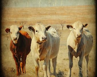 Farmhouse Decor Rustic Wall Art Texas Photography Cow print Baby Calfs Farm Animals