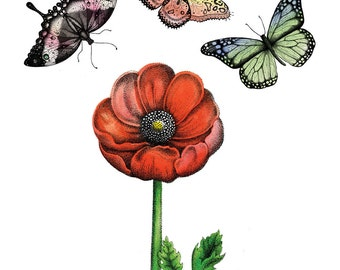 Butterflies and Poppy/ Glossy Poster