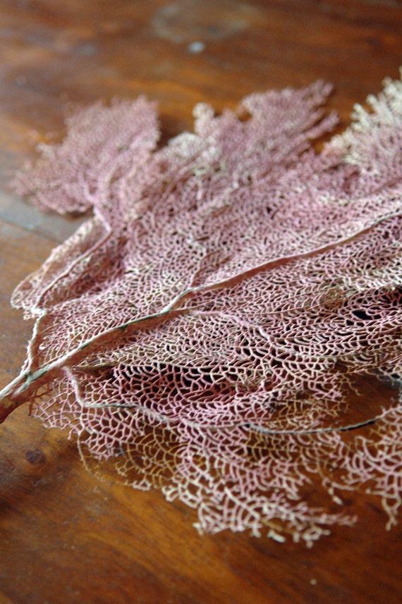 Sea Fan // Vintage Sea Fan Coral // Underwater Lace