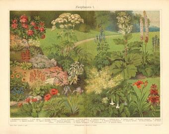 1905 Garden Flowers, Ornamental Plants I. Original Antique Chromolithograph to Frame