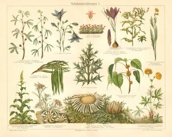 1904 Protecting Method of Plants, Sensitive Plant, Saffron, Anchor Plant, Sacred Fig, Mullein, Edelweiss, Globe-flower Antique Lithograph