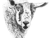 Ink Drawing Art Illustration Print Traditional Art Animal Art Black And White Art Sheep Portrait Pen And Ink Pointillism