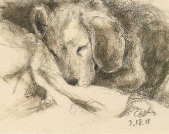Beagle Giclée Print Signed by Kate Garchinsky