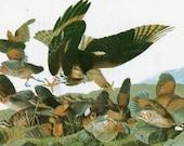 Audubon Birds of America Vintage 1979 Art Print Collectable Book PLATE 64 BOB WHITE