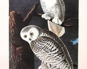 Audubon SNOWY OWL Bird Print Vintage 1979 Art Print Collectable Book PLATE 84 Beautiful Birds Home Interior Design