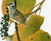 Audubon Birds of America Vintage 1979 Art Print Collectable Book PLATE 98 White-Crownec Sparrow