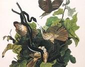 Audubon Birds of America Vintage 1979 Art Print Collectable Book PLATE 138 Brown Thrasher Nest Eggs Snake