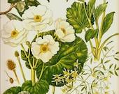 Vintage Botanical Print 1970 Color Art Print Wild Flowers Book PLATE 129 White Yellow Mount Cook Lily Petals Chart Summer Garden Plants