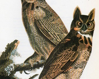 Audubon 1979 Owl Bird Vintage Art Print Collectable Book PLATE 38 Great Horned Owl Beautiful Picture to Frame Interior Design