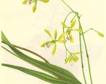 Vintage 1968 Color Print Wild Flowers of America Book PLATE 88 89 Butterfly Orchid and Twayblade