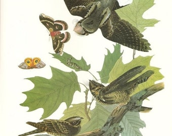 Audubon WILL BUTTERLY Birds 1979 Art Print Collectable Frameable Book PLATE 120 Whip Poor Will