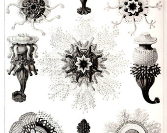 Ernst Haeckel Art Print Jellyfish Collectable Vintage 1974 Book PLATE 17 and 18 Siphonophora and Jellyfishes