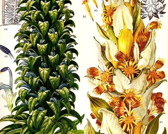 Vintage 1970 Color Art Print Wild Flowers Original Book PLATE 56 Large Beautiful Green Flowers White Yellow Plants Tropical