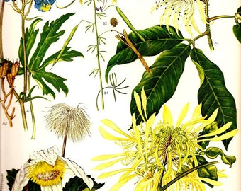 Vintage 1970 Color Art Print Wild Flowers Original Book PLATE 52 Tropical and Central Africa WIldflowers in Beautiful Yellow and Blue