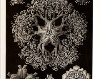 Ernst Haeckel Print JELLYFISH CORALS 2010 Colored Art Original Book Plate 69 70 Jellyfishes Gorgeous Detailed Beautiful Ocean Sea Corals