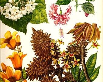 Vintage Botanical Print 1970 Color Art Mediterranean Wild Flowers Original Book PLATE 57 Spring Summer Beautiful Chestnut Yellow White Pink