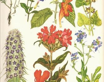 Vintage 1970 Art Print Wild Flowers Book Art Print 105 Beautiful Flowers Blooms Orange Red VIolet Blue Many Plants Garden