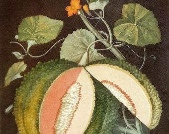 FRUIT PRINT MELON 2002 Art Print Original Book Plate 143 Beautiful Orange Cut Melon Yellow Flowers Leaves Vine Beautifully Colored Tile