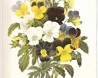 REDOUTE Vintage 1990 Art Print Botanical Original Book Plate 112 Beautiful PENSIES Flowers Blue Purple Yellow and White Spring Garden Plant